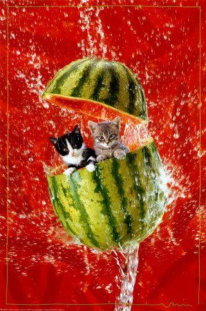 2400-4815~Kittens-Posters.jpg