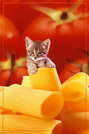 kittenmais.jpg